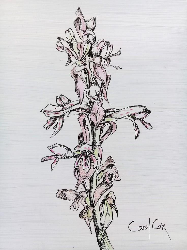 Orchid satyrium