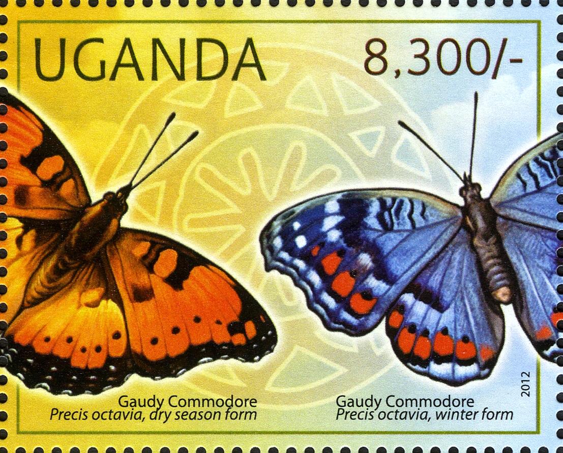 stamp gaudy commodore