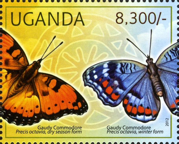stamp gaudy commodore